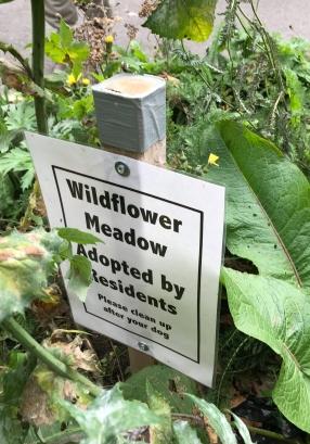 WF_WILDFLOWER